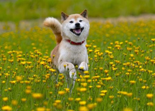 Galeria bałtycka dla psów. Czy można do galeri bałtyckiej wprowadzać psy? Zdjęcie psa. Galeria bałtycka dla psów